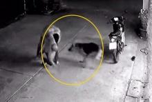 กราบขอขมา! วินโดนจับสำนึกผิดบุกร้านซ่อมจยย.ไม้หวดช่าง โดนหมาช่วยสู้ยิบตา