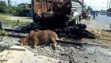 รถบรรทุกวัวซิ่งตัดหน้าฝ่าสัญญาณชนกับขบวนรถไฟที่เพชรบุรี