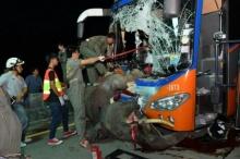 ด่วน!! รถทัวร์ชนช้างป่าตายอนาถกลางถนนลำปาง