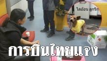 การบินไทย ชี้แจงกรณียิงหมาตาคาสนามบิน