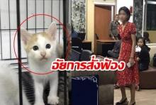 อัยการสั่งฟ้องดีเจซันฆ่าแมว ให้เจ้าของเรียกค่าสินไหม