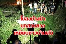 ระทึก!! โขลงช้างป่าบุกสวนยางเหยียบชาวบ้าน