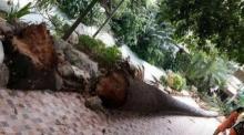 เศร้าสลด!! ต้นไม้ล้มทับ เด็กนร. ดับ 1 ในรร. หลังลมกระโชกแรง เมืองพัทลุง