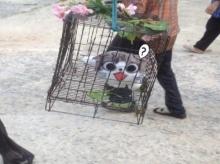 มีงี้ด้วย?? ชาวชัยนาท หัวใสใช้ตุ๊กตา จี้ แห่ขอฝนแทนแมวจริง!