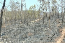 สั่งล่า!!มือเผาป่าเชียงใหม่ หลังพบข้อมูลวางเพลิง