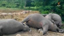 พบช้างป่าแก่งกระจานตาย 3 ตัว มีเลือดออกปาก-คาดโดนยาพิษ
