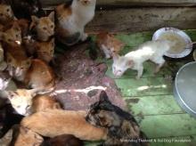 คนรักสัตว์รุดช่วยแมววัด..หลังถูกกักขังให้อดอาหาร