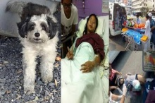 ชาวเน็ตแห่ช่วยเหลือน้องพิม เหยื่อรถพ่วงทับขา หมาแสนรักหายไป