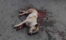 อดีต ส.ส. ดัง ฉุนหนักหมากัด..คว้าปืนยิง5นัดเลือดอาบถนน