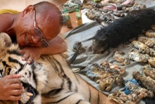 เจาะประเด็นข้อสงสัยเสือที่วัดป่าหลวงตาบัว-เงื่อนงำธุรกิจมืด