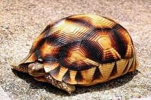 อธิบดีเต้น!!เต่าของกลางตัวละ2 ล้าน หายจากกรมอุทยานฯ!!