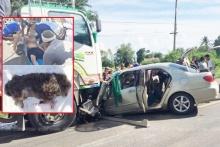 ตายยกคัน!! สาวซิ่งเก๋งชนรถพ่วง สลดไม่รอดทั้งคนทั้งสุนัข