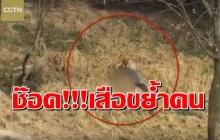 ช็อค!!หนุ่มจีนดับหลังหยอกล้อกับเสือก่อนถูกขย้ำจริง