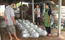 มหาสารคาม ฝนตกต่อเนื่อง!! ส่งผลดีต่อเกษตรกรผู้เพาะเลี้ยงปลา สร้างรายได้เพิ่ม!