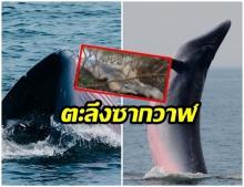 วาฬบรูด้า เกยตื้นตายอีก 1 ตัวใกล้ป้อมพระจุลฯ