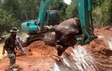 กระบะและรถเก๋ง ชนวัวกระทิง นน.กว่า 1,000 กก.ที่กำลังข้ามถนนสาย 304 ตายคาที่