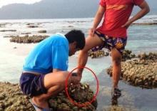 จับแล้ว! ต่างด้าวแงะหอยมือเสือเกาะหลีเป๊ะ ทำปะการังเสียหาย