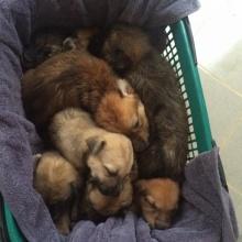พัทยาท่วมหนัก..ลูกหมาจมน้ำตายหลายสิบตัว