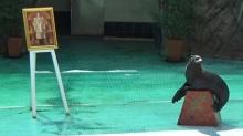ตะลึง! แมวน้ำ หมอบกราบ พระบรมฉายาลักษณ์ ในหลวง ร.9