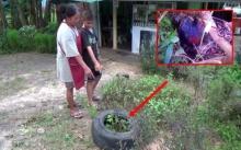 สาวใหญ่ กำลังถางหญ้าดีๆ สายตาเหลือบเห็นสีม่วงๆ คิดว่าเปลือกมังคุด หยิบขึ้นมาดูชัดๆ แทบผงะ!!