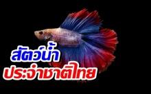 รมว.เกษตร เสนอ 'ปลากัด' เป็นสัตว์น้ำประจำชาติไทย