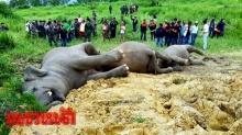 จนท.ย้ายซากช้างป่าผ่าพิสูจน์ เผยไม่ทิ้งปมถูกไฟฟ้าช็อตตาย