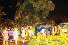 ต้นโพธิ์100ปีวัดใหญ่ล้ม ชาวบ้านโยงเหตุหญิงไก่เข้าสักการะหลวงพ่อ