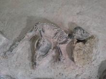 """พบโครงกระดูก """"สุนัข"""" ฝังพร้อมศพมนุษย์ราว 2,000 ปีก่อน ที่เมืองศรีเทพ จ.เพชรบูรณ์"""
