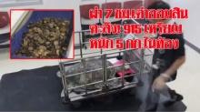 """ตะลึง!!! ผ่าตัด 7 ชั่วโมง """"เต่าออมสิน""""  915 เหรียญ หนักถึง 5 กิโลกรัม อยู่ในกระเพาะ"""