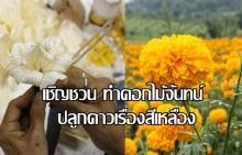 จัดถวายพระเพลิงทุกอำเภอ เชิญชวนทำดอกไม้จันทน์ ปลูกดาวเรืองสีเหลือง แสดงความอาลัย