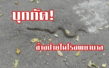 ผวาหนัก! งูเห่า หนีไฟป่า เข้ากัดช้างป่วยในโรงพยาบาล....