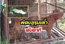 พนักงานส่งน้ำแข็งให้ร้านอาหาร ถูกหมาพิตบูล 2 ตัวรุมขย้ำเสียชีวิต