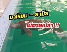 """ผู้ใหญ่กระบี่ ชี้บทเรียน""""ยามีล-มาเรียม""""เสนอตั้งสถานีช่วยชีวิตสัตว์ทะเลในพื้นที่"""