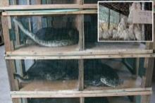 ชาวบ้านลงมติยอมให้ตั้งฟาร์มเพาะงูเหลือม