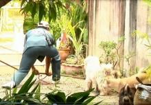 นาทีชุลมุน ทั้งคน ทั้งหมา ไล่จับงูเข้าบ้าน วิ่งกันอลหม่าน (คลิป)
