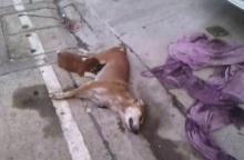คนร้ายใจโหดยิงแม่สุนัขตาย ลูกไม่รู้คลานดูดนมสุดเวทนา