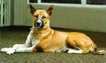 สิ้นแล้ว!! คุณทองแดง สุนัขทรงเลี้ยง เสียชีวิตแล้ว รวมอายุ 17 ปี