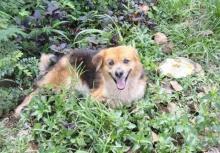 ดีใจด้วย!!น้องหมาตกรถรอ7เดือน ได้พบกับเจ้าของแล้ว!!