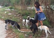 สาวพัทยาใจบุญเลี้ยงอาหารหมาจรจัดกว่า80ตัว