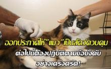 คนเลี้ยงแมวต้องรู้! ออกประกาศให้แมว เป็นสัตว์ควบคุม ต่อไปนี้ต้องปฏิบัติตามข้อบังคับ อย่างเคร่งครัด!