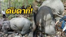 สุดเศร้า!! จนท.พบศพช้างพลายสมรักษ์ คาดอาจตกจากหน้าผาตายคาที่