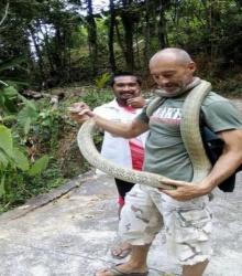 ทึ่ง! ฝรั่งจับงูจงอาง 4 เมตรมือเปล่าหน้าตาเฉย