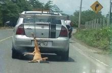 ทั่วโลกประณาม!!! คนใจร้ายผูก หมา ไว้ท้ายรถแล้วขับลากไปทั่ว