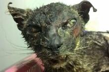 คนรักสัตว์น้ำตาซึม แห่ช่วยแมวเคราะห์ร้าย ถูกจับเผาทั้งเป็นโยนทิ้งขยะ
