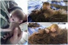 สุดหดหู่ภาพลูกลิงนอนกอดร่างแม่ถูกพรานป่ายิงตาย