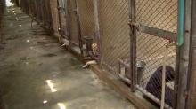 เผยสภาพจริง คอกสุนัขตำรวจK9 สัตว์เสี่ยงชีวิต ที่ใช้มานานกว่า 40 ปี (คลิป)