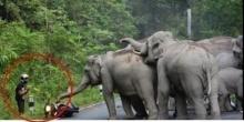 หนุ่มมอเตอร์ไซด์เกือบตาย..ช้างตกใจเสียงรถบิ๊กไบท์ก่อนหน้า!! จนเขาต้องทำแบบนี้(มีคลิป)