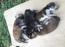 โลกช่างโหดร้าย!!! ภาพลูกหมา 6 ตัว ถูกปล่อยทิ้งไว้ข้างมอเตอร์เวย์ ช่วยไม่ทันตายหมด