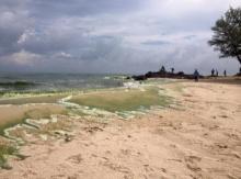 ศูนย์วิจัยทรัพยากรทะลฯ ยืนยัน! ทะเลสีเขียวปลอดภัย