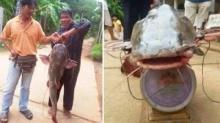 ชาวเน็ตฮือฮา!! ตะลึงปลาตัวใหญ่ยักษ์สุดๆ (ชมภาพ)